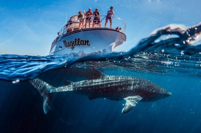 Kings Ningaloo Reef Tours Whale Shark Snorkelling Adventure Tour.