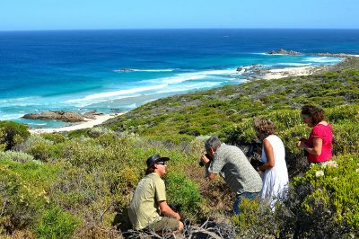 South West Eco Discoveries Coastal & Wildlife Eco Tour
